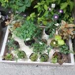 φυτώριο (ο κήπος είναι σημαντικό κομμάτι της ιαπωνικής κουλτούρας)